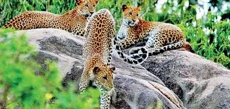 Day Excursions to Wilpattu National Park From Colombo