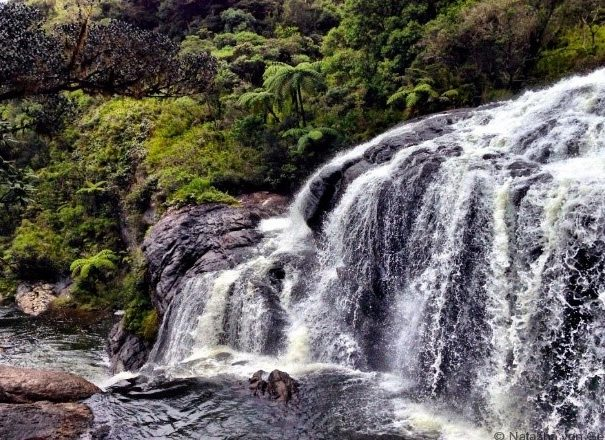 Private Day Trip Horton Plains and Pedro Tea Factory from Nuwara Eliya