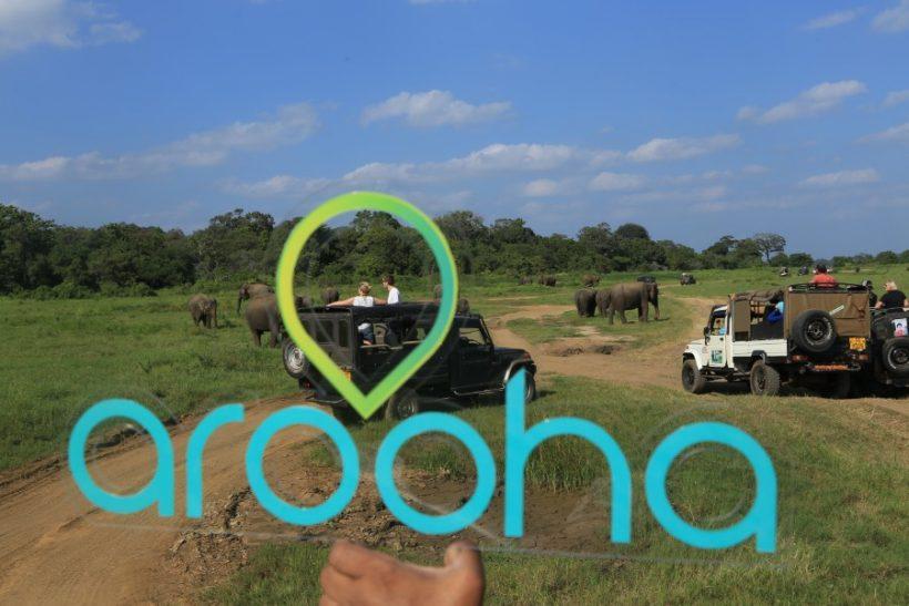 Minneriya National Park Safari – Special Elephant Safari (1)