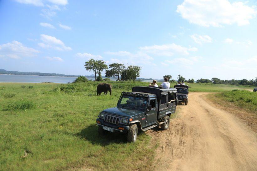 Minneriya National Park Safari – Special Elephant Safari (13)