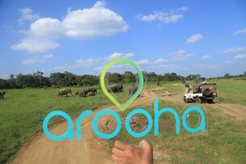 Minneriya National Park Safari – Special Elephant Safari (14)