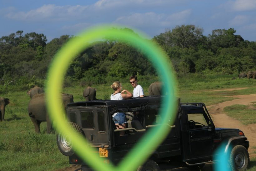 Minneriya National Park Safari – Special Elephant Safari (15)