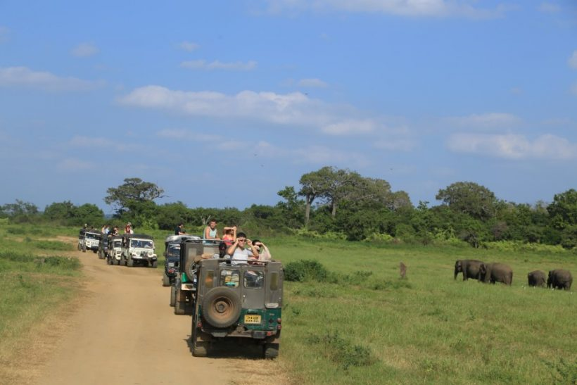 Minneriya National Park Safari – Special Elephant Safari (3)