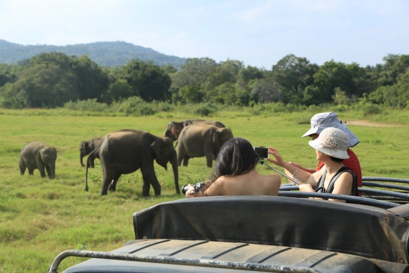 Minneriya National Park Safari – Special Elephant Safari (5)