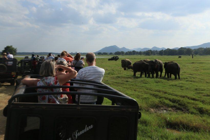 Minneriya National Park Safari – Special Elephant Safari (8)